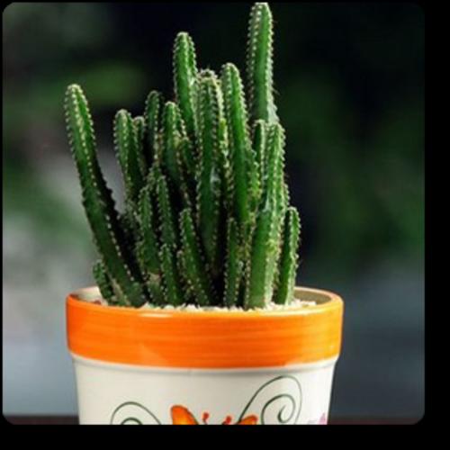 Cactus Plant Nature Rabbit